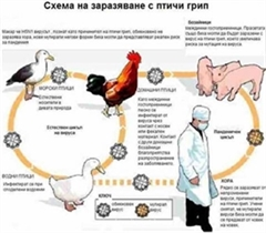 Bird Flu News