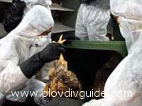 News on the Bird Flu again