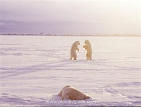 Polarkälte ergreift Bulgarien