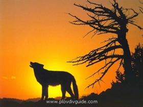 VULTCHI PRASNIZI / MRATINZI – (Wolfsfeste) – 14.-21. November