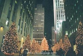 Bürgermeister messen ihre Weihnachtsbäume