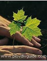 Tag des Pflanzenschutzes