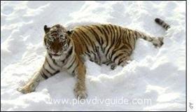 Siberian Cold Grips Bulgaria on Sunday