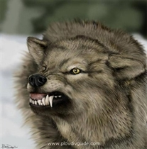 Wolf Days - February 2-3