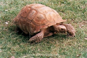 The oldest tortoise in Bulgaria was found in a Plovdiv backyard