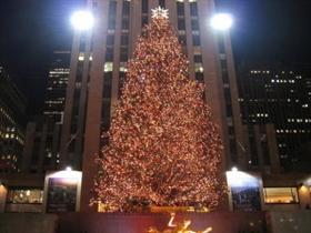 Christmas Tree news