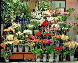 Flower Autumn 2009 exhibition opens tomorrow at the Plovdiv International Fair gorunds