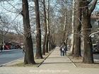 13. Russki Blvd walkway