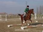 3.Horse training